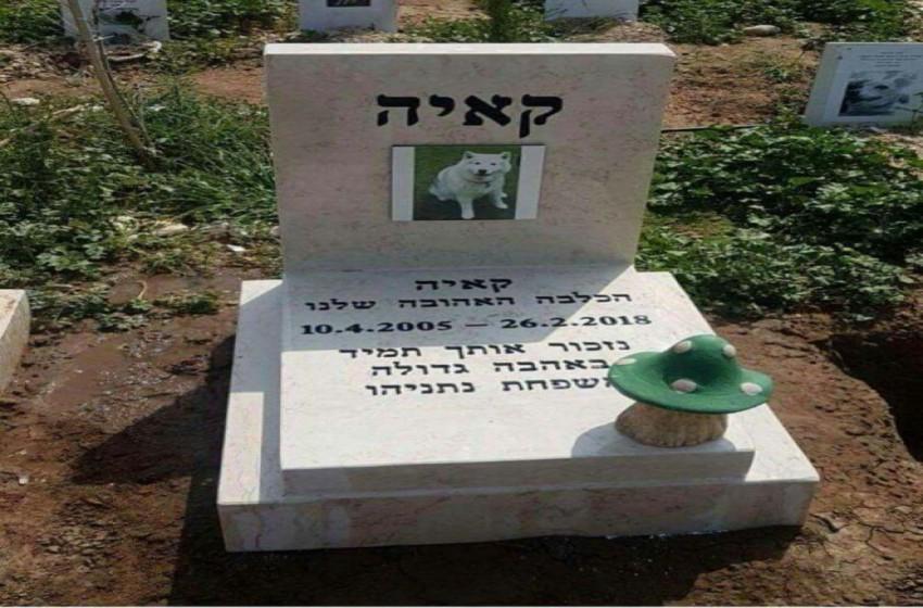 عائلة نتنياهو تبني قبرا فارها للكلبة كايا